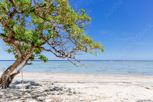 Staande foto Oceanië Mangroves growing in the sunshine on the Coral Coast of Fiji