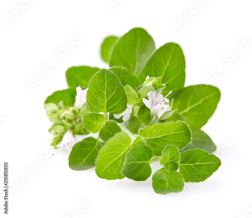 Foto op Plexiglas Aromatische Oregano flowers on white background