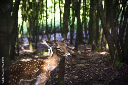 In de dag Ree fawn among the trees of the forest