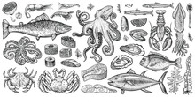 Seafood Vector Illustrations. Hand Drawn Line Sea Fishes, Oysters, Lobster, Squid, Octopus, Crabs, Prawns, Fish Fillet. Laminaria And Wakame Seaweeds. Healthy Food Natural Set