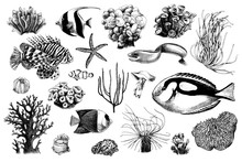Hand Drawn Set Of Corals And C...