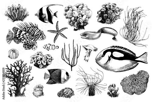 Fototapeta premium Ręcznie rysowane zestaw koralowców i mieszkańców ryb koralowych