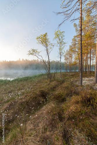Fototapeta Small foggy forest lake at sunrise summer morning obraz na płótnie