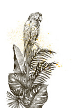 Hand Drawn Sketch Black And White Vintage Exotic Tropical Bird Parrot Macaw In Palm Leaves And Monstera. Vector Illustration Isolated Object