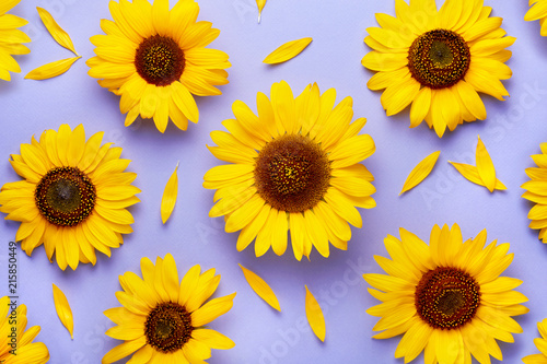 Deurstickers Zonnebloem Sunflower pattern background on a purple background viewed from above. Top view.