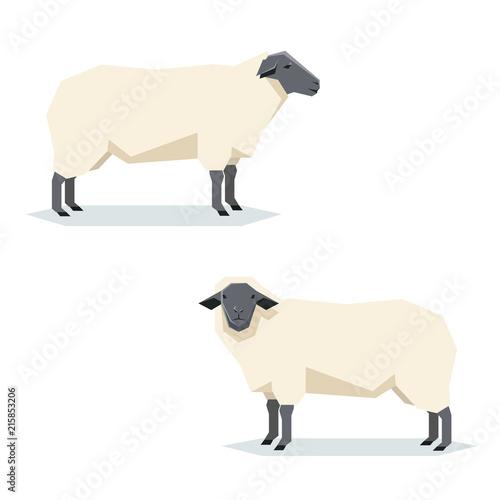 Flat geometric Suffolk sheep Fototapete