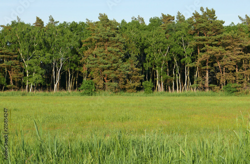 Foto op Canvas Pistache North German landscape with forest and meadow