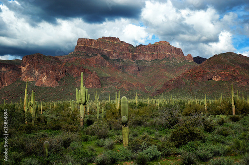 Arizona Desert Superstition Mountains with Cacti and Clouds Wallpaper Mural