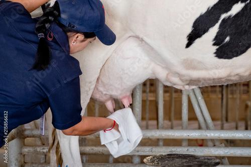 Obraz na płótnie The cow gives plenty of milk