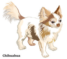 Colored Decorative Standing Portrait Of Dog Long-haired Chihuahua Vector Illustration