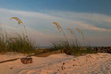 Sea Oats On The Beach With Ol...