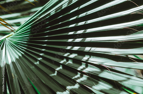 Nature poster. Green palm branch. Closeup. Tropical vibes
