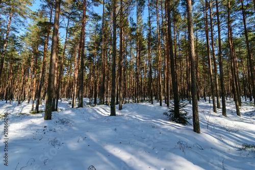 Fotobehang Grijze traf. tree trunk textured background pattern