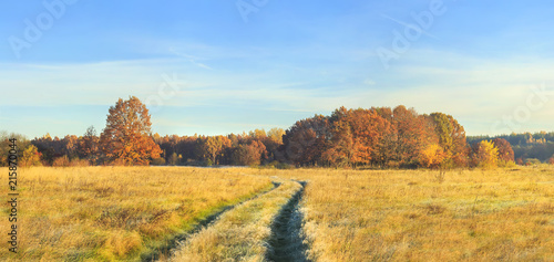 Poster Miel Panoramic view on autumn nature landscape on sunny day. Yellow and red trees on meadow and blue clear sky. Amazing rural scene. Fall. Vivid scenery of golden field with colorful trees on horizon.