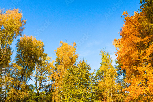 Foto op Canvas Herfst Beautiful autumn forest. Yellow and orange trees against the blue sky