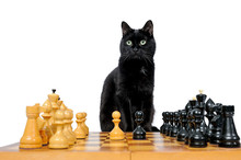 Black Cat Sits Near Chess