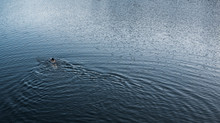 Action Shot Of Woman Swimming In Fresh Water Lake