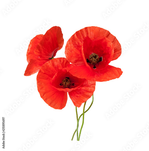 Poster Poppy Beautiful wild red poppies isolated on a white background.