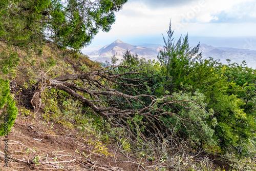 Tuinposter Zalm Ascension Island