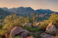 Saguaro Cactus Grow On The Slo...