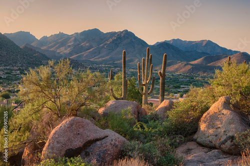 Foto op Canvas Cactus Saguaro cactus grow on the slopes of the Pinnacle Peak Park in the Scottsdale community, AZ.