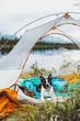 Boston Terrier Laying Down in Tent in Alaska