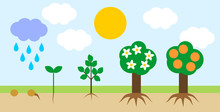 Landscape With Life Cycle Of Orange Tree. Plant Growth Stage From Seed To Tree With Fruits
