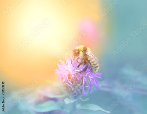 Türaufkleber Makrofotografie Photo of a macro bumblebee