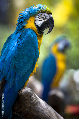 Staande foto Papegaai Tropical exotic macaw parrot bird with bright vivid colorful feathers