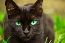 Portrait Of A Cute Black Cat W...