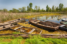 Abandoned Boats In The Swamp