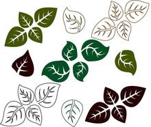 Green Basil Leaf. Icons Isola...