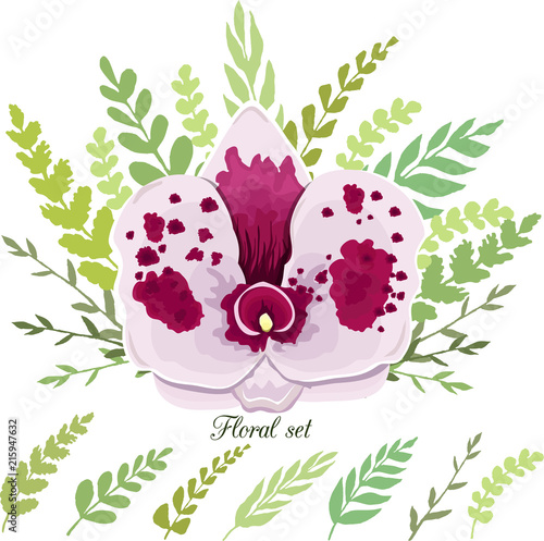 Poster Hibou Collection of white orchids and green leaves. Vector illustration.