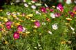canvas print picture - Sommerblumen