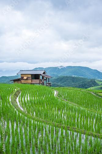 Photo sur Toile Les champs de riz View Terraced Paddy Field in Mae-Jam Village, Chaingmai, Thailand