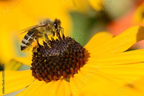 Plakat Pracowite pszczoły
