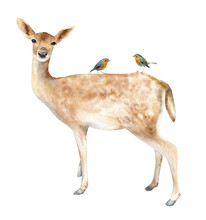 Deer With Birds Robin. Watercolor Illustration. Isolated Background