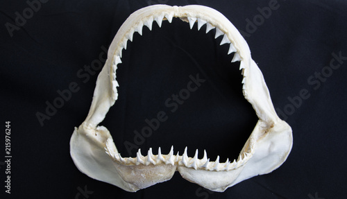 Shark jaw on black background Tableau sur Toile