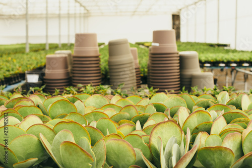 Spoed Foto op Canvas Planten Plants growing against flower pots at greenhouse