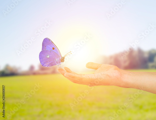 ecological butterfly