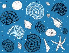 Sea Shells Repeat Pattern On B...