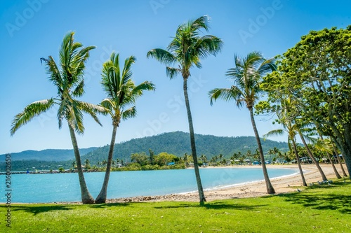 Airlie beach palm trees and coconut trees in Australia Canvas Print