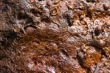 Texture Of A Crust Of Dark Bro...