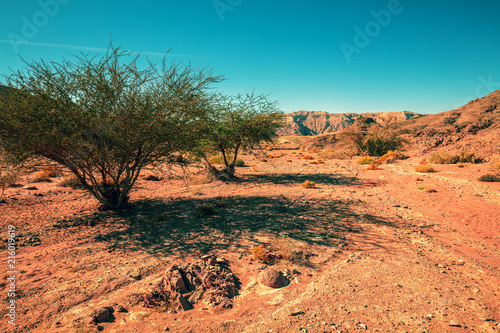 Dry river bed with trees. The road to the Red Canyon. Mountain landscape of the desert