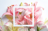 Composition with beautiful blooming lily flowers and frame on white background