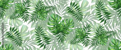 Fototapeta liście   panoramiczne-liscie-palmy