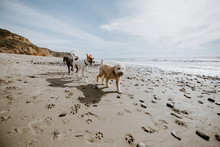 Dogs Playing Together At An Ocean Beach