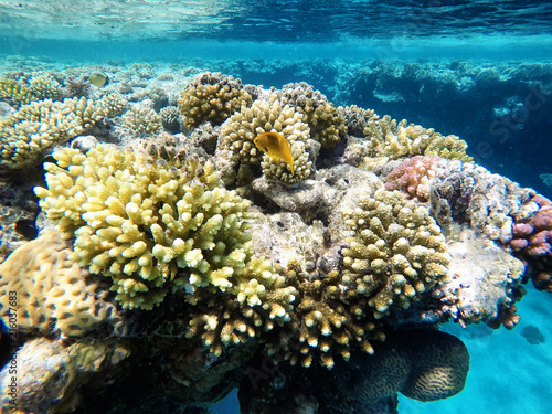 Staande foto Koraalriffen Coral reefs under water