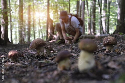 Fotografie, Obraz  Man collect mushrooms in summer forest