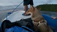 Beautiful Dog On A Leash Rides...